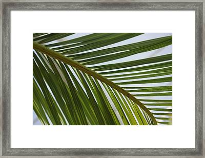 Peridot 2 Framed Print by Angelique Francis