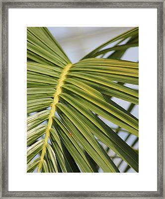 Peridot 4 Framed Print by Angelique Francis