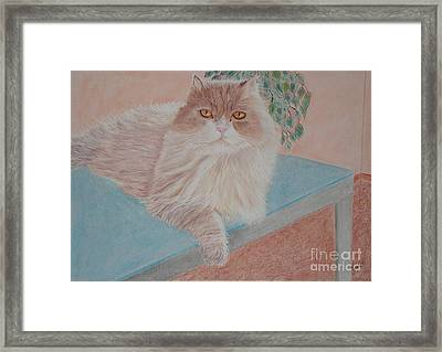 Persian Cat Framed Print by Cybele Chaves