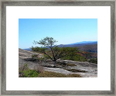 Persistence Framed Print by Skip Willits