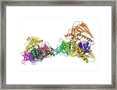 Pertussis Toxin Molecule Framed Print by Kateryna Kon