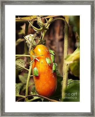 Pest Attack Framed Print by Sinisa Botas