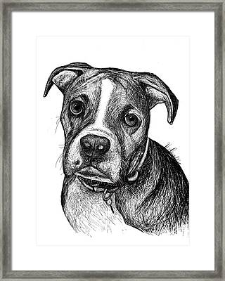 Pet Portraits Boxer Framed Print by Heidi Creed