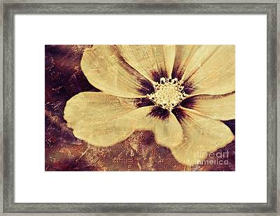 Petaline - T37d03a3 Framed Print by Variance Collections