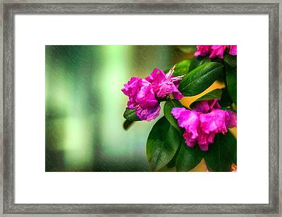Petals And More Framed Print by Sennie Pierson