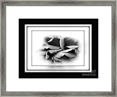 Petals And Shadows 2 Framed Print by Kaye Menner