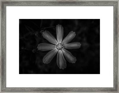 Petals Framed Print by Mihai Ilie