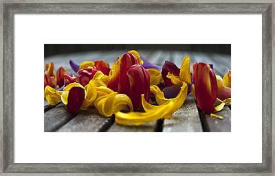Petals Framed Print by Svetlana Sewell