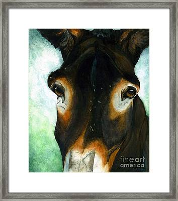Pete The Mule Framed Print by Janine Riley