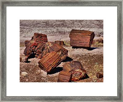Petrified Wood Framed Print by Dan Sproul
