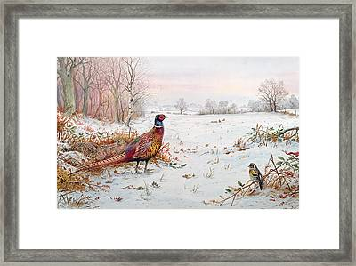 Pheasant And Bramblefinch In The Snow Framed Print by Carl Donner