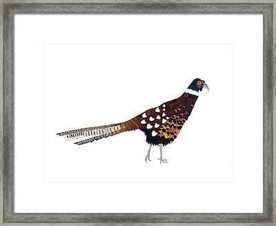 Pheasant Framed Print by Isobel Barber