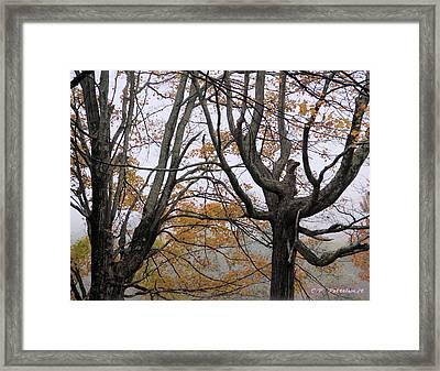 Pheonix In The Fall Framed Print by Carolyn Postelwait
