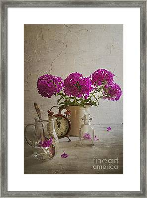 Phlox Framed Print by Elena Nosyreva