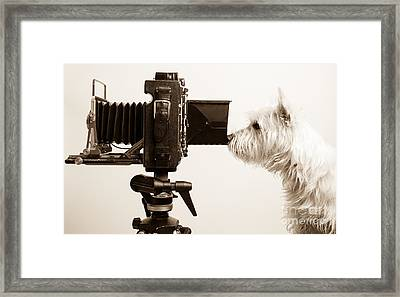 Pho Dog Grapher Framed Print by Edward Fielding