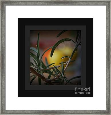 Photo For Your Soul... Framed Print by Marija Djedovic