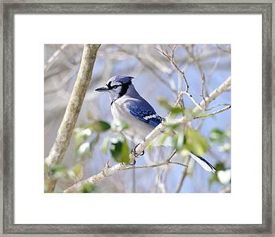 Photographer Framed Print by Angel Cher