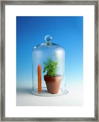 Photosynthesis And Carbon Dioxide Framed Print by Science Photo Library