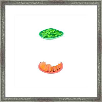 Photosynthesis And Respiration Framed Print by Science Photo Library
