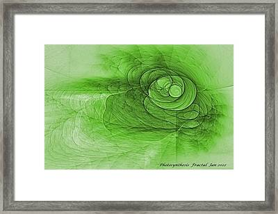 Photosynthesis Framed Print by Doug Morgan