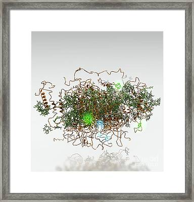 Photosystem I, Molecular Model Framed Print by Ram�n Andrade, 3Dciencia