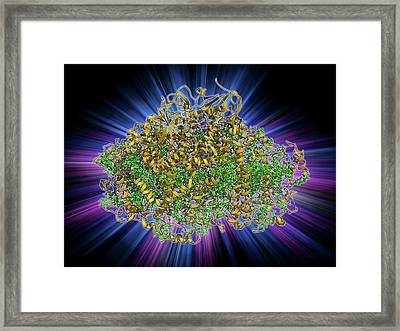 Photosystem I Molecule Framed Print by Laguna Design