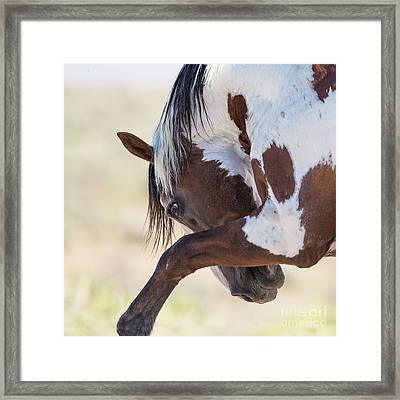 Picasso Strikes Out Framed Print by Carol Walker