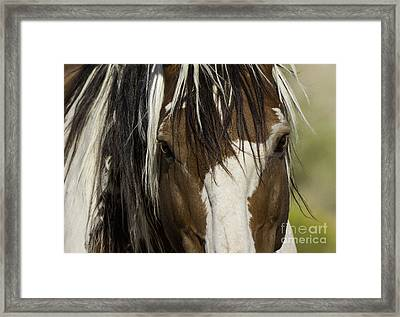 Picasso's Eyes Framed Print by Carol Walker