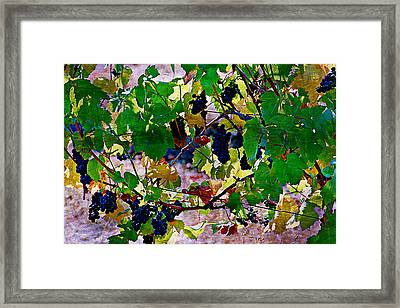 Pick Me Stomp Me I Framed Print by Ken Evans