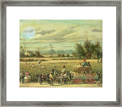 Picking Cotton Framed Print by William Aiken Walker