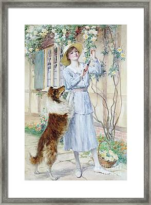Picking Roses Framed Print by William Henry Margetson