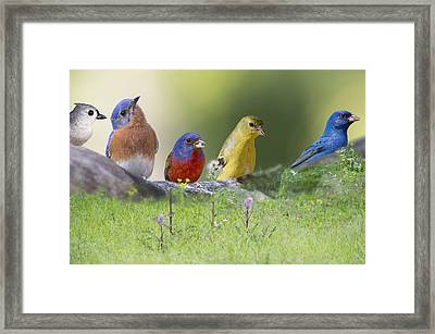 Picnic Lunch Framed Print by Bonnie Barry