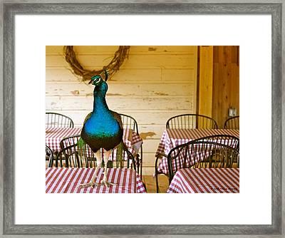 Picnic Peacock Framed Print by Tabitha Williams