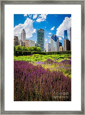 Picture Of Chicago Skyline With Lurie Garden Flowers Framed Print by Paul Velgos