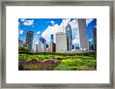 Picture Of Lurie Garden Flowers With Chicago Skyline Framed Print by Paul Velgos