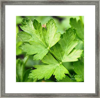 Picture Perfect Parsley Framed Print by French Toast