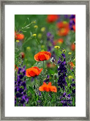 Pictures Of Colorful Flowers Framed Print by Boon Mee