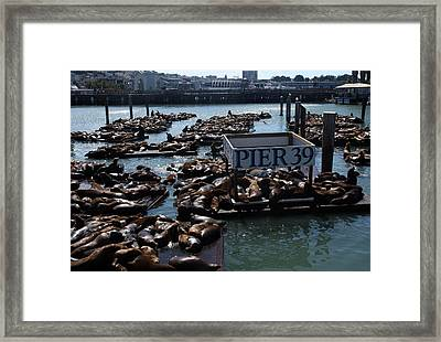 Pier 39 San Francisco Bay Framed Print by Aidan Moran