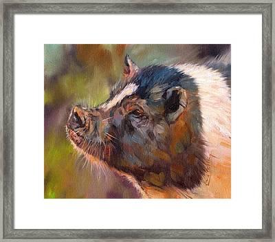 Pig Framed Print by David Stribbling