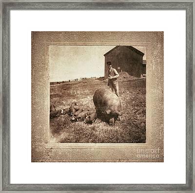 Pig Farm Framed Print by Angela Wright
