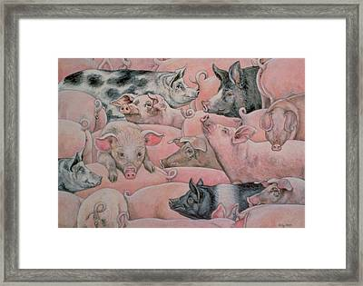 Pig Spread Framed Print by Ditz