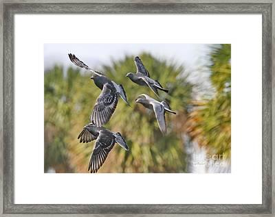 Pigeon Brigade Framed Print by Deborah Benoit