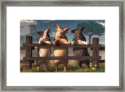 Pigs On A Fence Framed Print by Daniel Eskridge