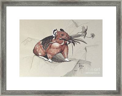 Pika Foraging Framed Print by Art By - Ti   Tolpo Bader