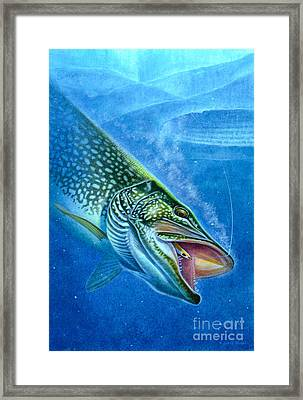 Pike And Ice Fishing Framed Print by Jon Q Wright