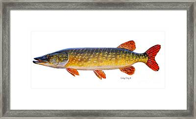 Pike Framed Print by Carey Chen