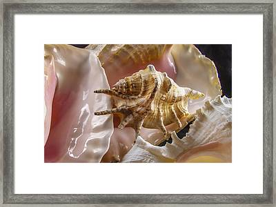 Pile Up Framed Print by Jean Noren
