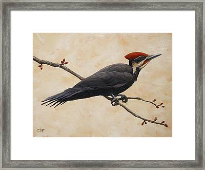 Pileated Woodpecker Framed Print by Crista Forest