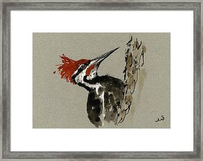 Pileated Woodpecker Framed Print by Juan  Bosco