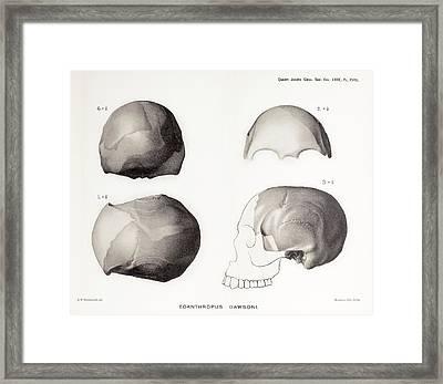 Piltdown Man Skull Framed Print by Paul D Stewart